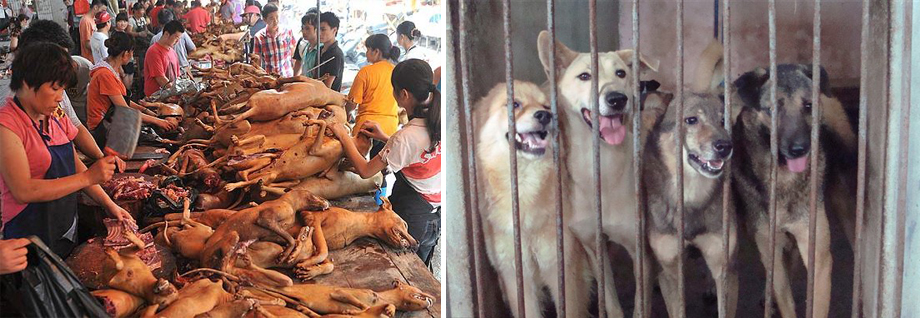 dog-and-cat-meat-festival-in-yulin-city-will-be-banned-by-the-government