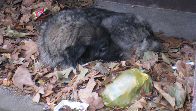 Stray dog sleeping on garbage