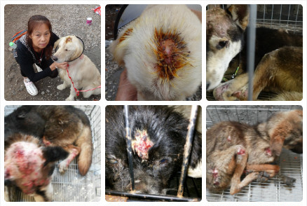 Rescued and injured dogs